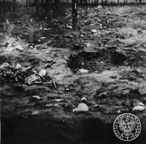 Exhumations at the Treblinka campsite. Scattered bones. November 7th 1945 Photo: AIPN